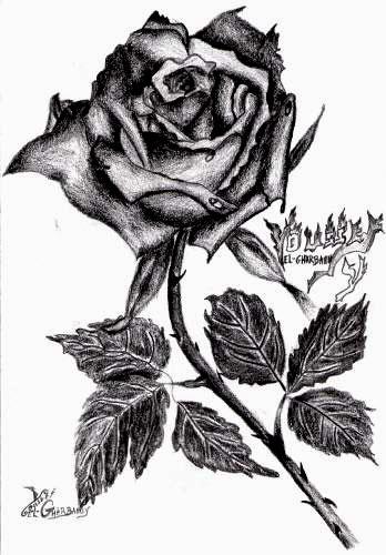 Rose noire blog de usf dessins - Dessin de rose ...